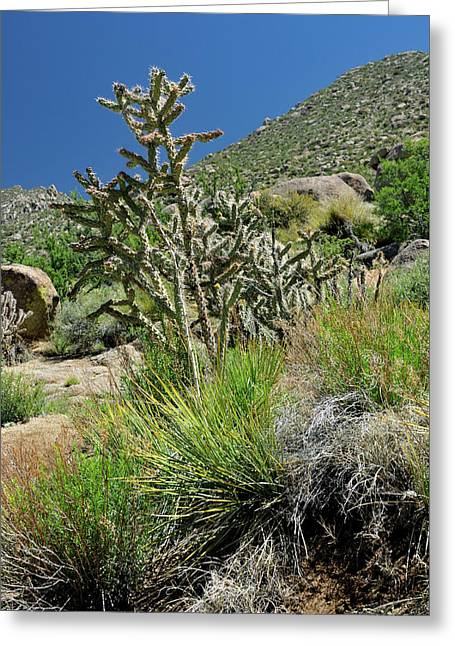 Greening Of The High Desert Greeting Card