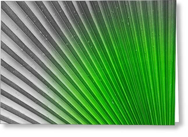 Greenish Palm Greeting Card by Gigi Kobel
