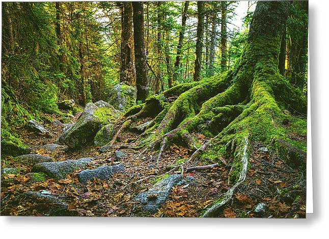 Greenleaf Trail Greeting Card by Robert Clifford