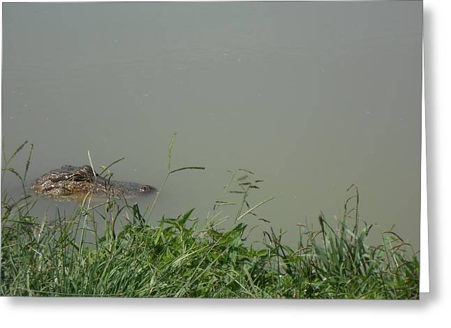 Greenwood Gator Farm Greeting Card