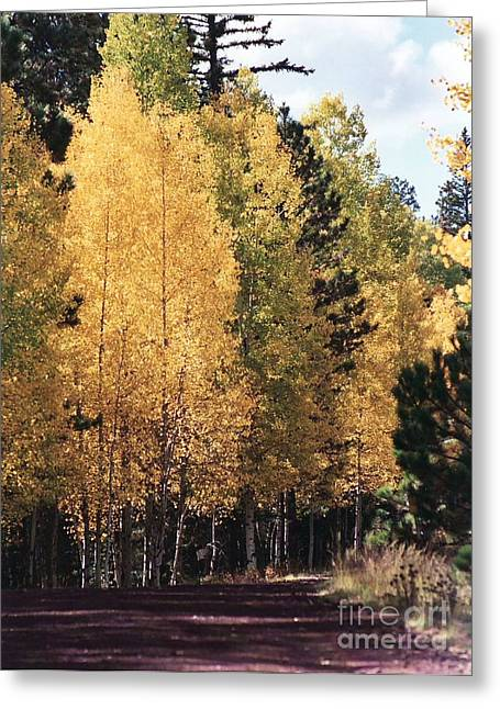 Greer Arizona Aspen Trees Greeting Card