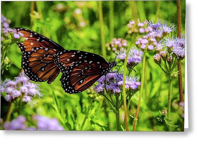 Gregg S Mist Flower With Monarch Butterflies Photograph By