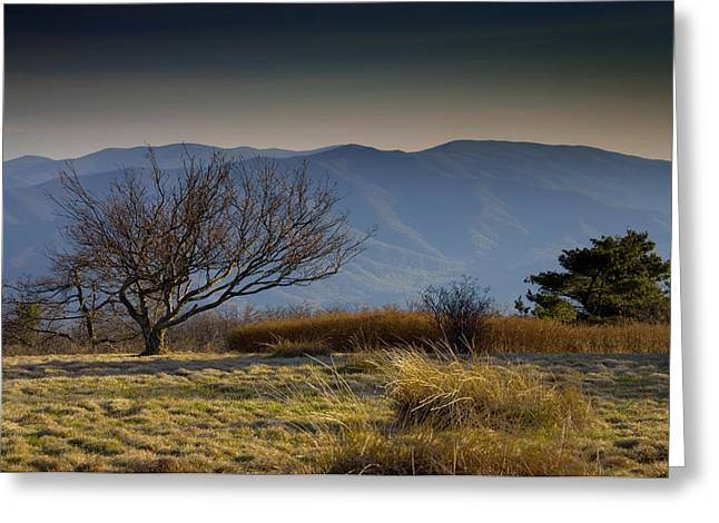 Gregory Bald - Great Smoky Mountains National Park - Tennessee Greeting Card