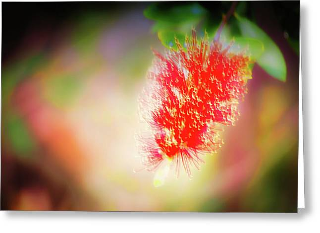 Grevillea Dream Greeting Card