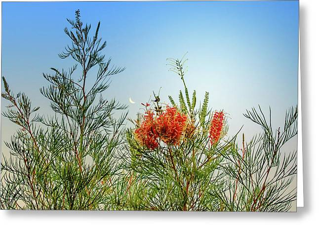 Grevillea With Moon Greeting Card