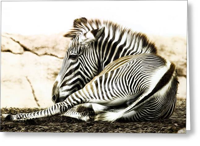 Grevy's Zebra Greeting Card by Bill Tiepelman