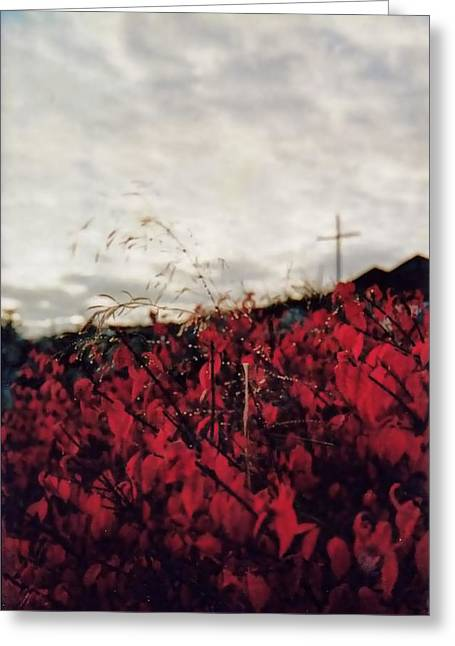 Greeting Card featuring the photograph Grey And Red by Sergey and Svetlana Nassyrov
