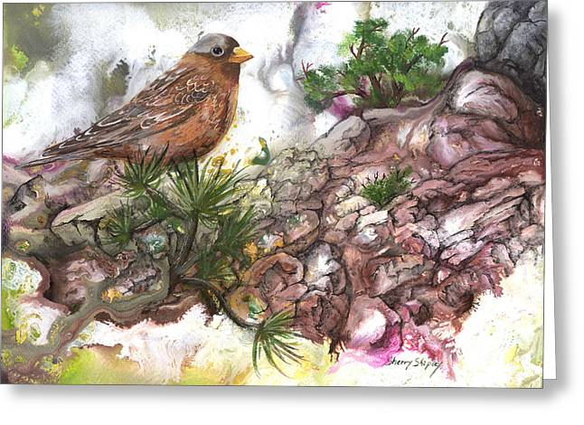 Greeting Card featuring the painting Grey Crown Rosy Finch by Sherry Shipley