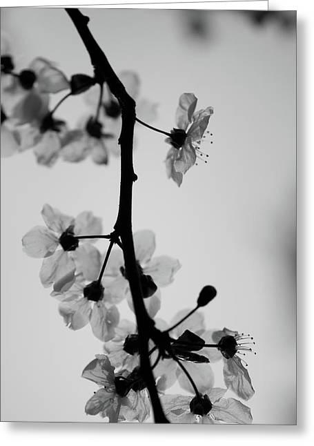 Grey Greeting Card by Daniel Lih
