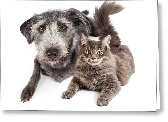 Grey Dog And Cat Laying Closely Together Greeting Card by Susan Schmitz