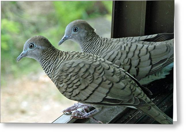 Grey Doves Greeting Card by Russell Pittock