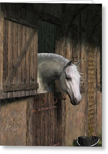Grey Horse In The Stable - Waiting For Dinner Greeting Card by Jayne Wilson