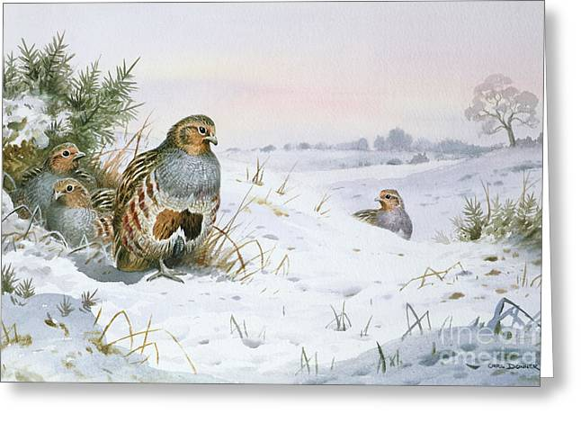 Grey Partridge Greeting Card by Carl Donner