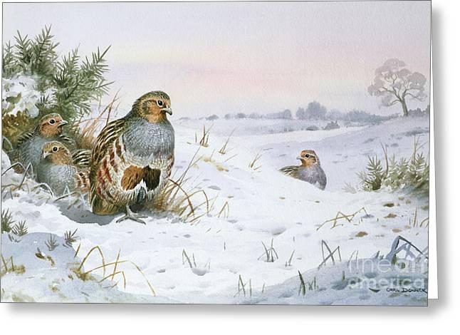 Grey Partridge Greeting Card