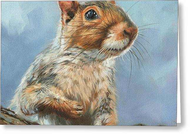 Grey Squirrel Greeting Card by David Stribbling