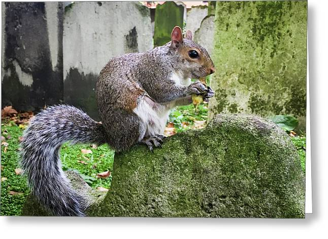 Greeting Card featuring the photograph Grey Squirrel  by Geoff Smith