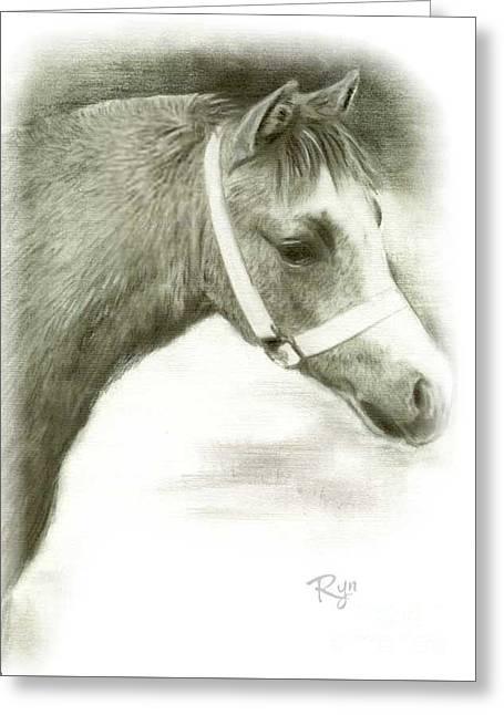 Grey Welsh Pony  Greeting Card