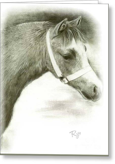 Grey Welsh Pony  Greeting Card