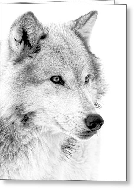 Grey Wolf Profile Greeting Card