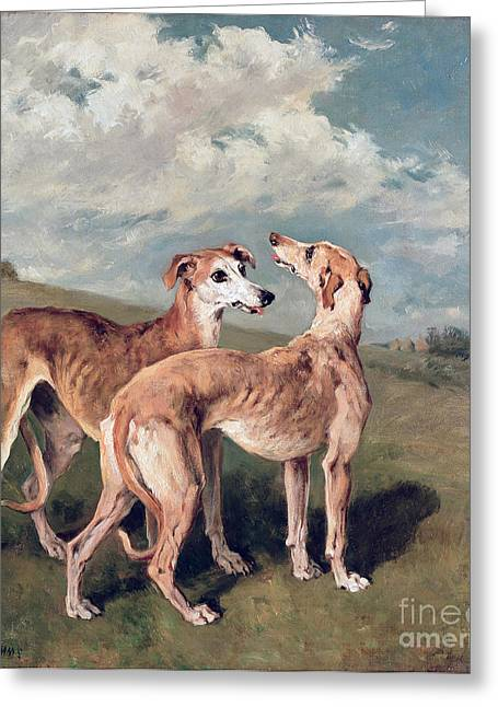 Greyhound Greeting Cards - Greyhounds Greeting Card by John Emms