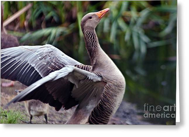 Greeting Card featuring the photograph Greylag Goose Poetry by Silva Wischeropp
