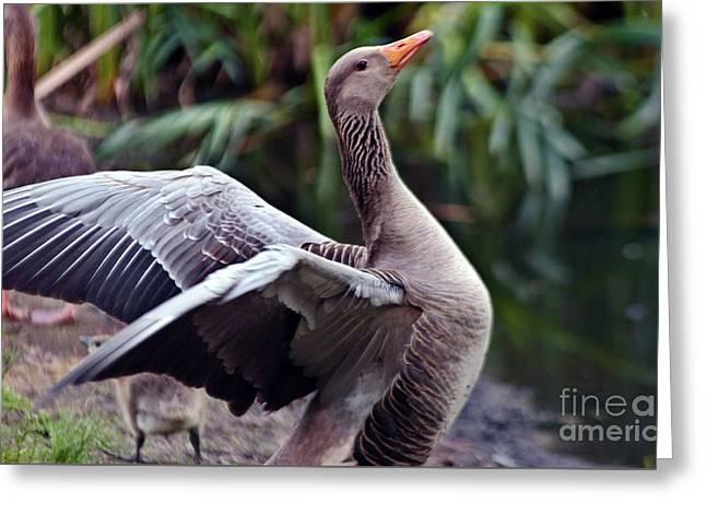 Greylag Goose Poetry Greeting Card