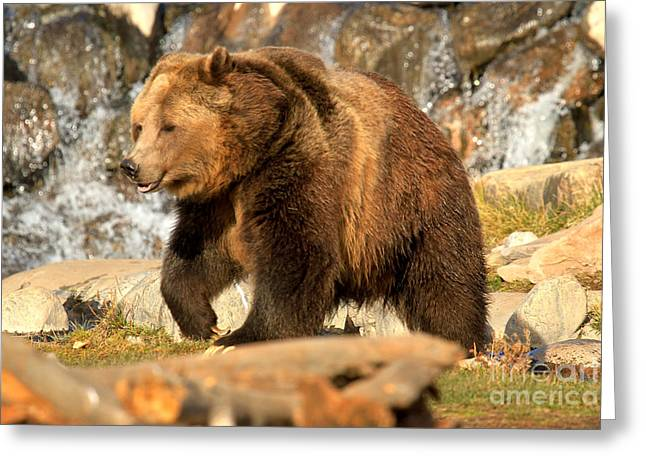 Grizzly At The Falls Greeting Card