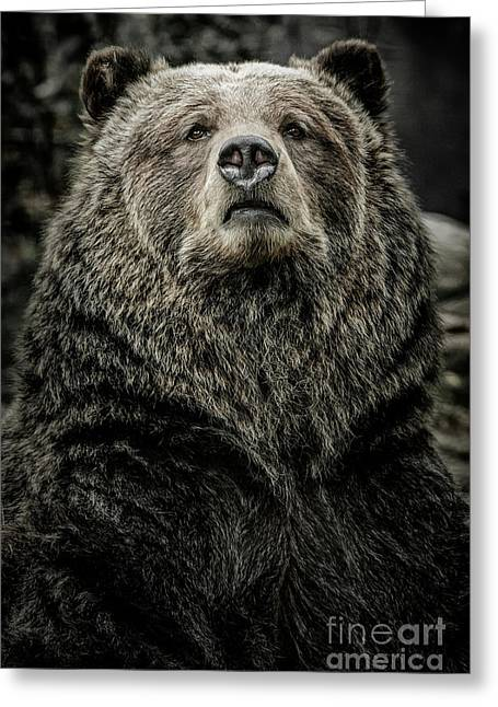 Greeting Card featuring the photograph Grizzly Bear by Brad Allen Fine Art