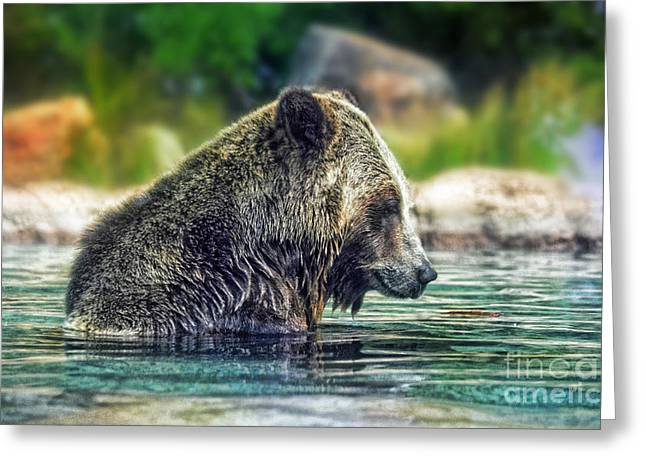 Grizzly Bear Enjoying A Dip In The Water  Greeting Card by Jim Fitzpatrick