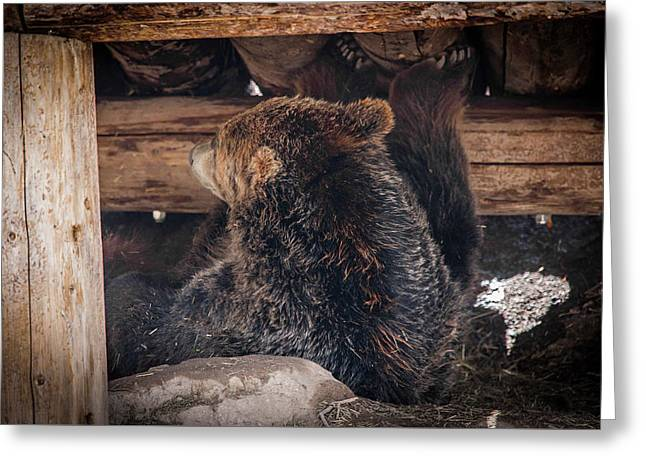 Grizzly Bear Under The Cabin Greeting Card by Dan Pearce