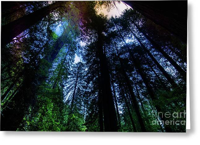 Grizzly Creek Redwood Grove Greeting Card by Blake Webster