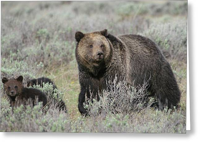 Grizzly Family Greeting Card