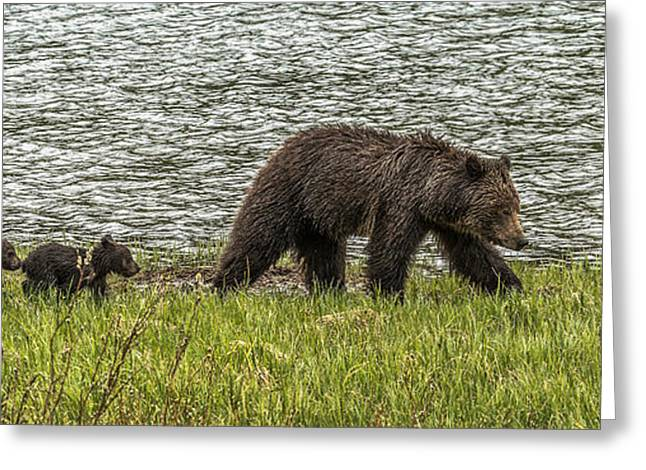 Greeting Card featuring the photograph Grizzly Family by Yeates Photography