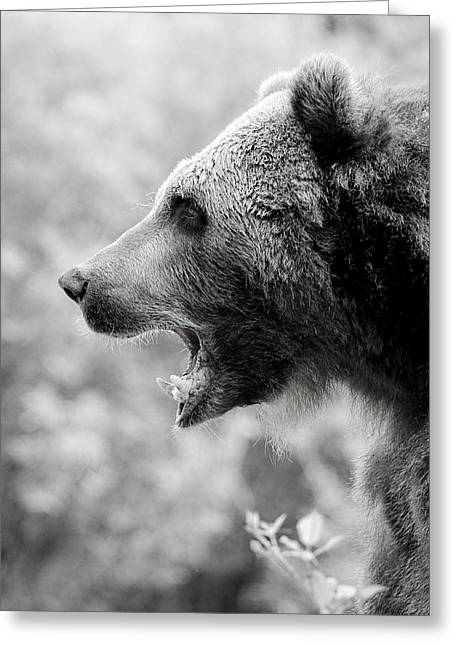 Grizzly Growl Black And White Greeting Card by Athena Mckinzie