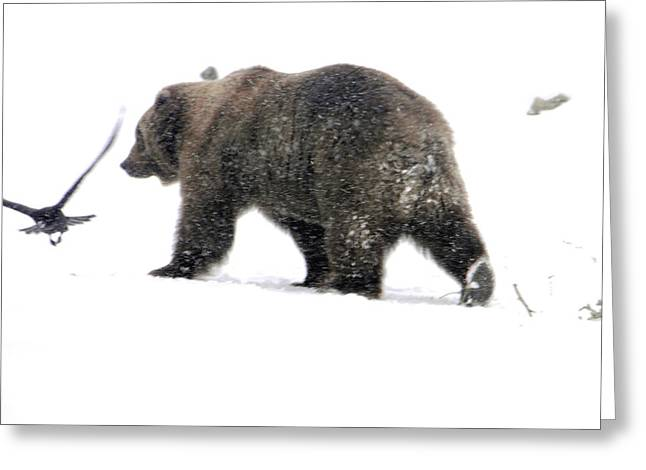 Greeting Card featuring the photograph Grizzly by Meagan  Visser