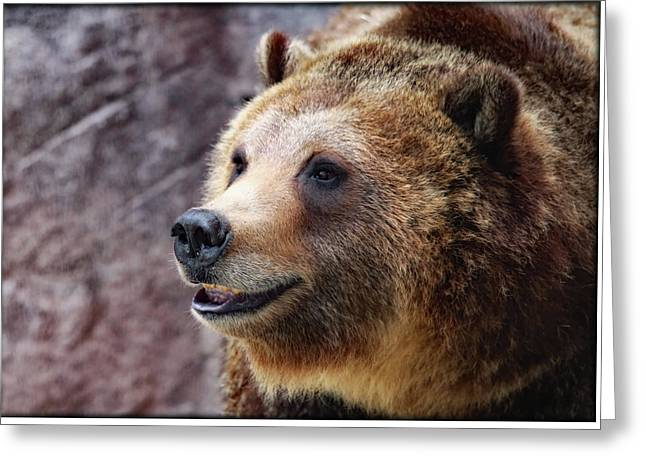 Grizzly Smile Greeting Card