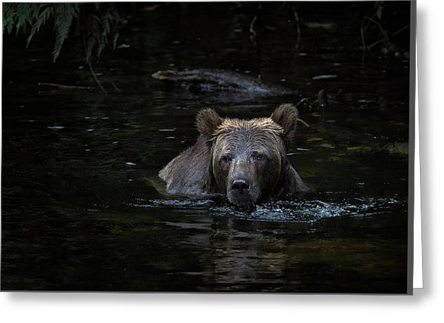 Grizzly Swimmer Greeting Card