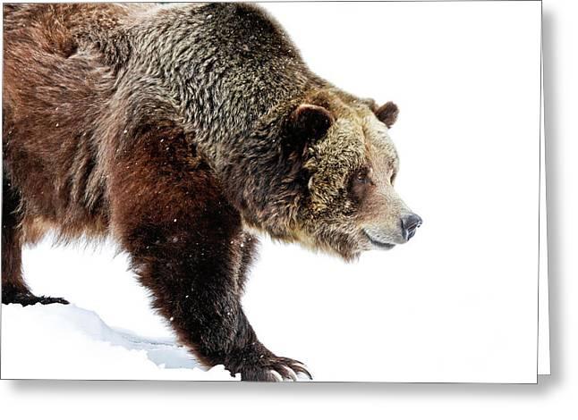 Grizzly Walk About Greeting Card by Athena Mckinzie