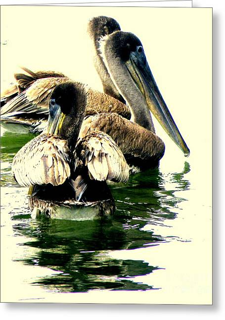 Feeding Birds Photographs Greeting Cards - Grocery Shopping Greeting Card by Joe Jake Pratt