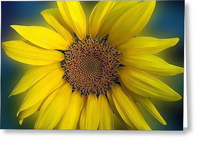 Groovy Sunflower Greeting Card