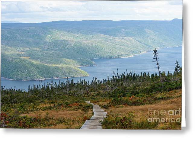 Gros Morne View From Partridgeberry Hill Greeting Card