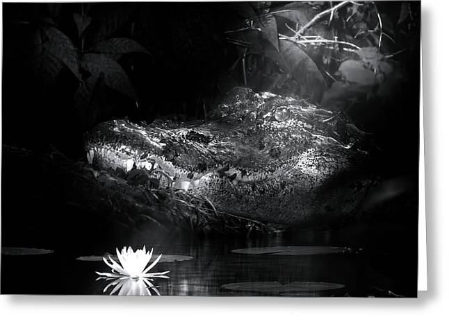 Grotto Of The Swamp Gator Greeting Card