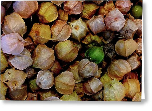 Ground Cherry 2 Greeting Card by Mark Victors