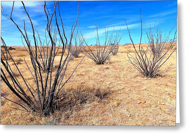 Ground Level - New Mexico Greeting Card