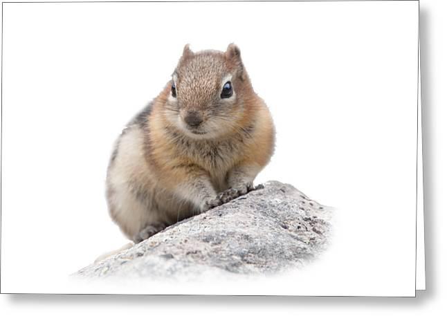 Ground Squirrel T-shirt Greeting Card