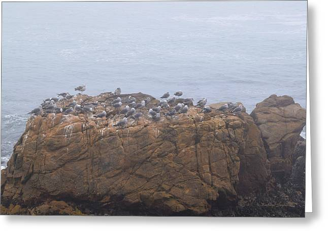 Grounded Due To Fog Cambria California Greeting Card by Barbra Snyder