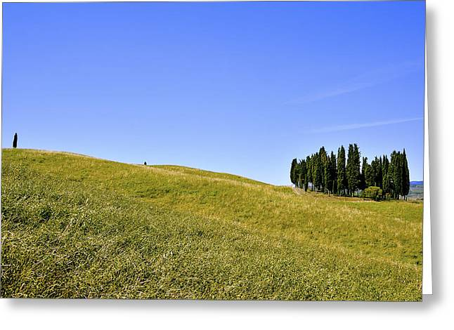 Group Of Cypresses Greeting Card