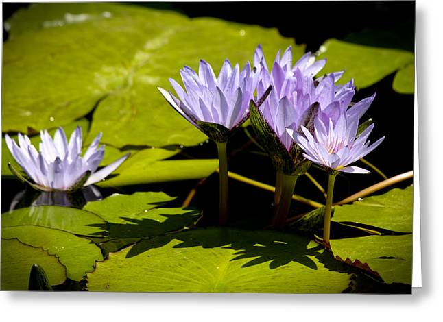 Group Of Lavender Lillies Greeting Card by Teresa Mucha