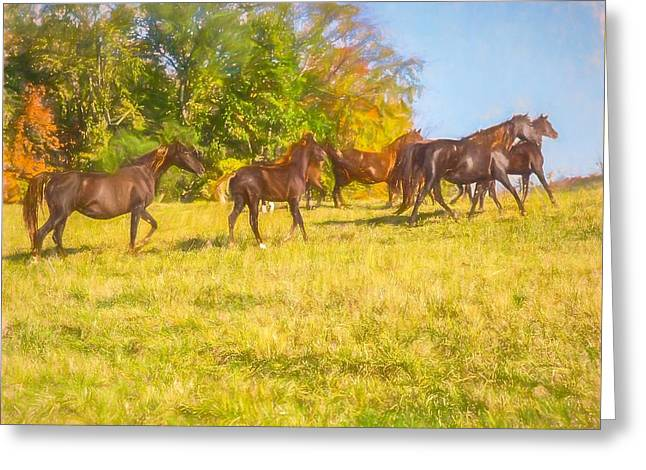 Group Of Morgan Horses Trotting Through Autumn Pasture. Greeting Card