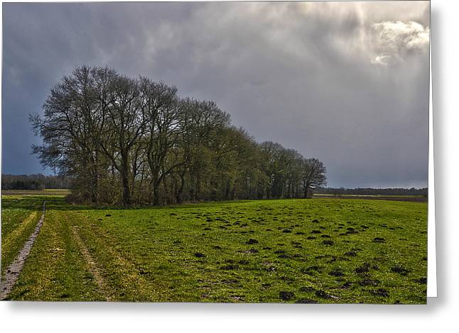 Greeting Card featuring the photograph Group Of Trees Against A Dark Sky by Frans Blok